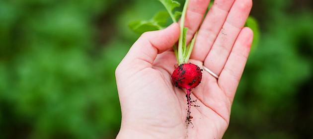 környezettudatos életmód kertészkedés