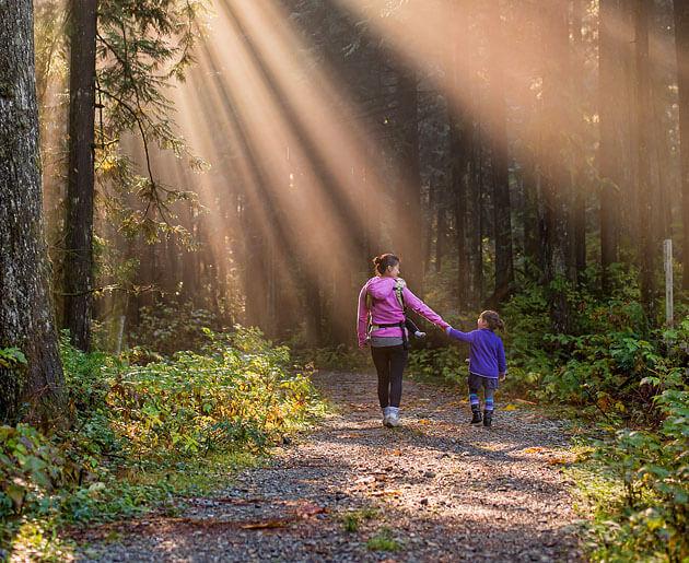 környezetvédelem gyerekeknek, erdőgazdálkodás